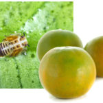 Help Protect Local Citrus Trees