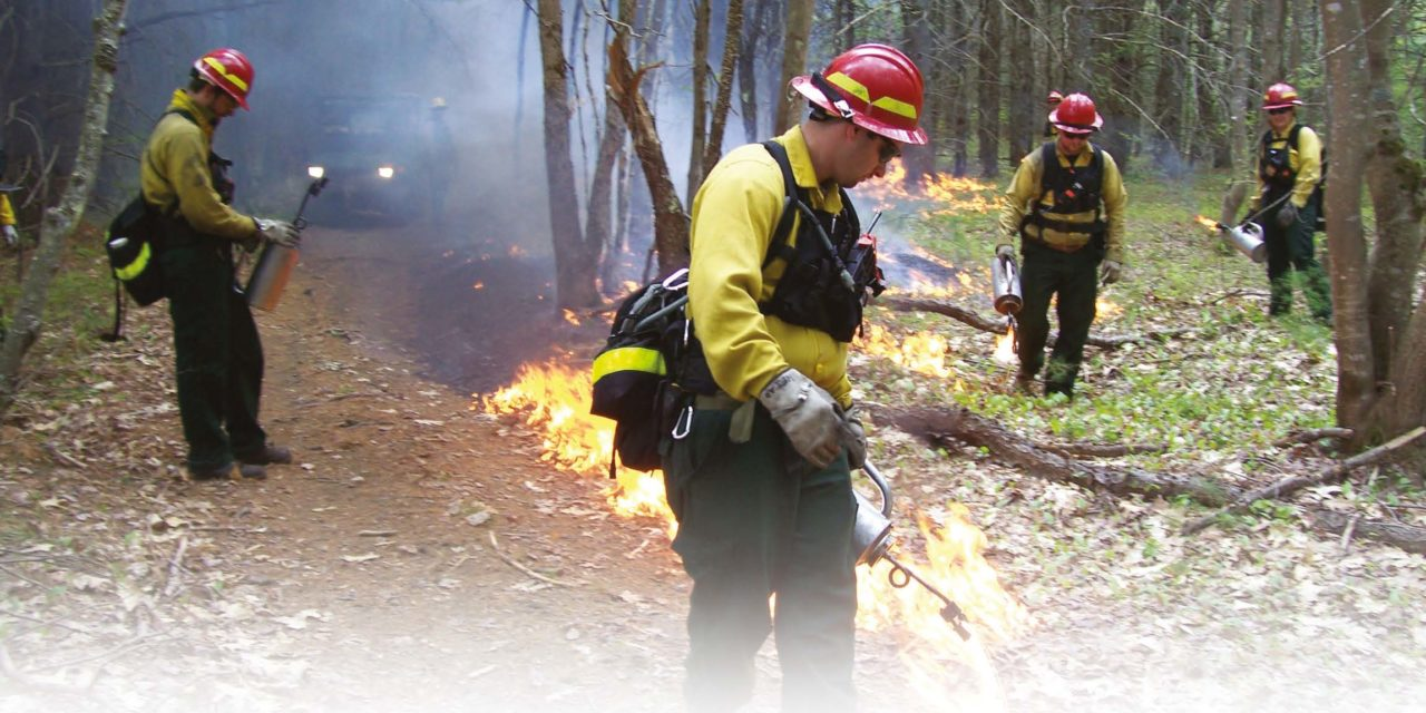 Why Low-Landers Should Care about Prescribed Burns in Local Mountains