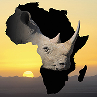 Rhinos At Risk, Part 6: #StopKillingRhinos