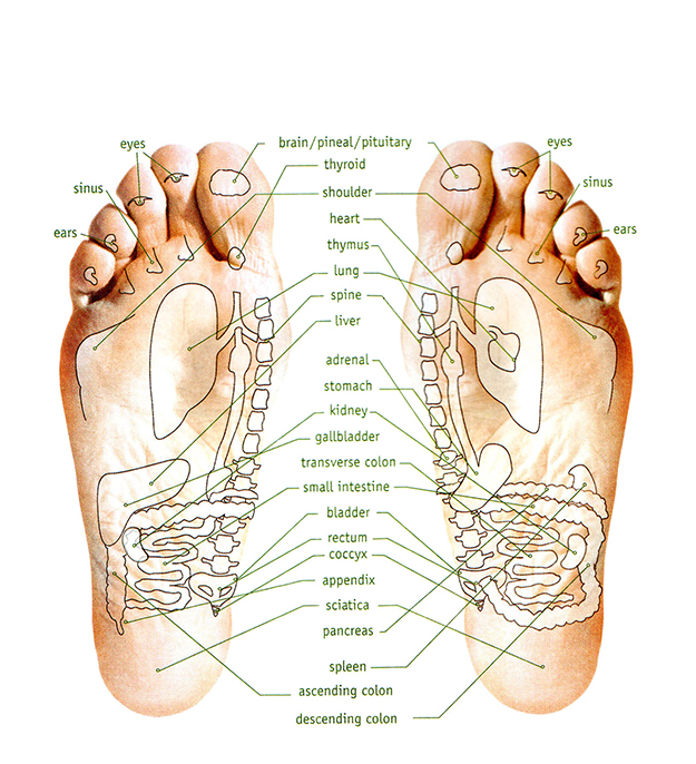 feet_diagram