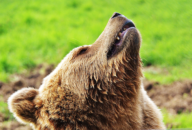 """City of Highland Residents Warned— """"Watch for Bears and Other Wild Beasts"""""""