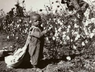 My Cotton-Picking Story…