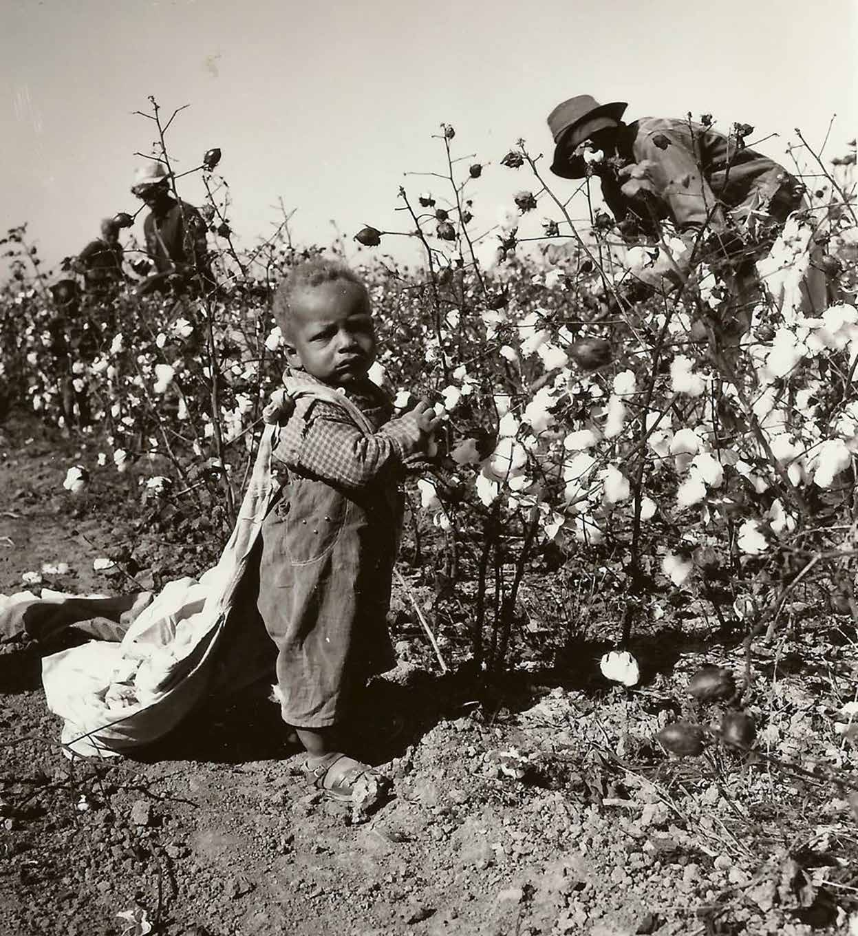 My Cotton-Picking Story…   VOICE