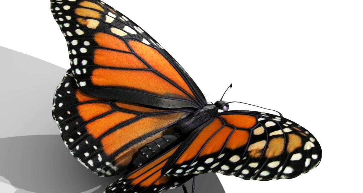 Help Save the Monarch Butterflies
