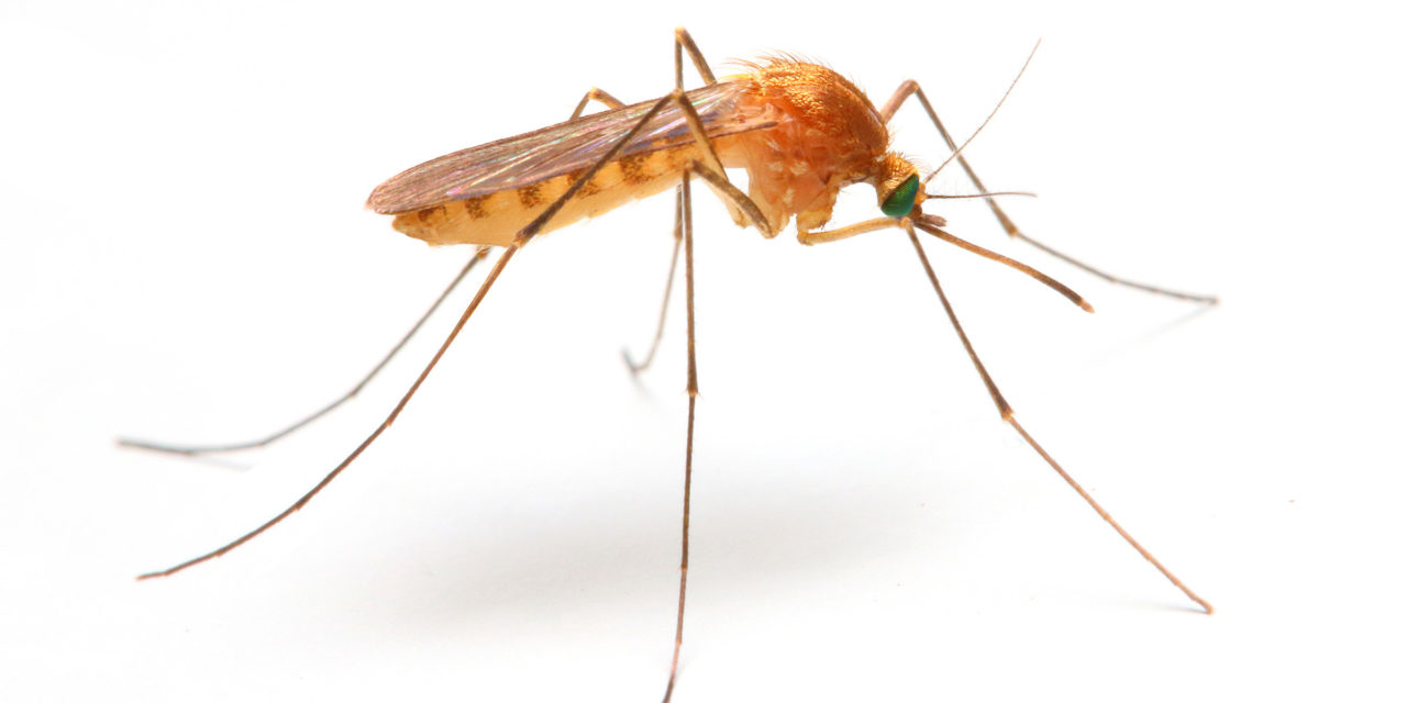 First West Nile Virus Death Recorded for 2017
