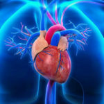 Oh, Beating Heart: Your Life Sustaining Electrical System