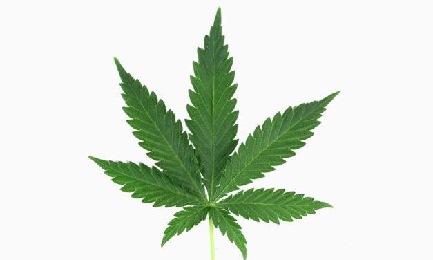 Seniors Turning to CBD-Marijuana for Pain Relief