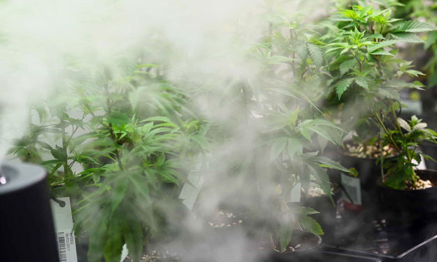 Pesticide Compliance for Cannabis Growers