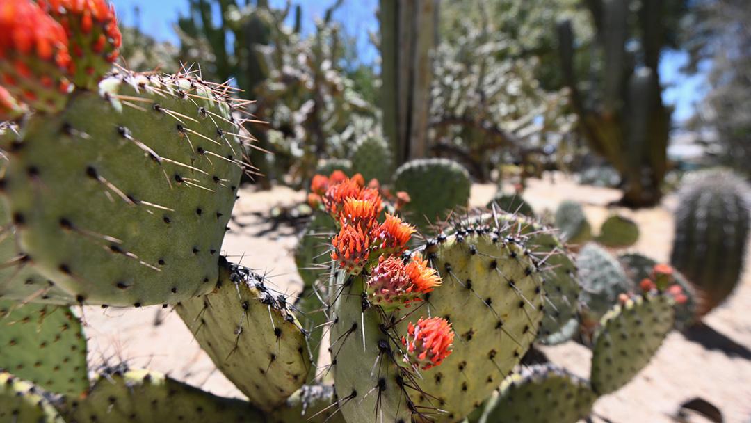 San Bernardino County Museum Opens New Outdoor Gardens
