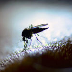 West Nile and Other Vector Borne Diseases